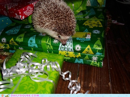 presents,reader squee,pets,hedgehog,squee,holidays