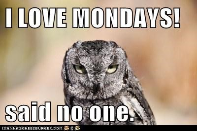 said no one ever,cranky,tired,owls,angry,mondays