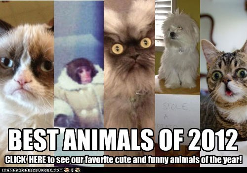 lil bub,best of,ikea monkey,colonel meow,ugs,dog shaming,Year In Review,2012,Grumpy Cat