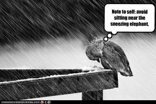 birds elephant gross raining sneezing - 6906340608