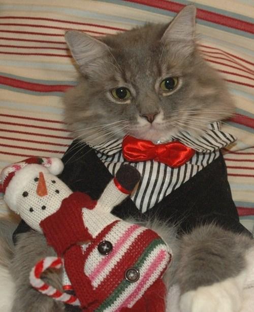 christmas,cat