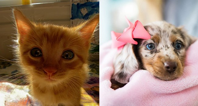 aww pets gorgeous cute love animals - 6906373