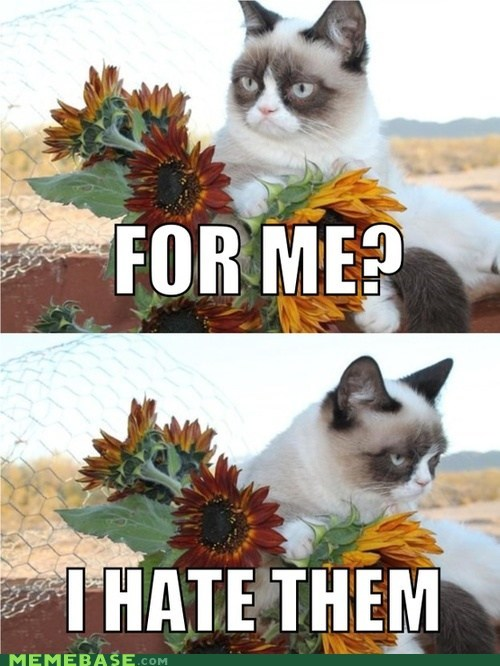 hate,tardar sauce,flowers,Grumpy Cat