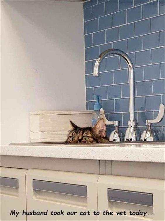 clinic photos esacpe vet Cats funny - 6906629