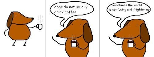 drinking coffee,confusing,frightened,coffee,dogs
