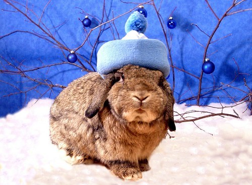 Bunday snow winter rabbit bunny squee hat - 6906822912