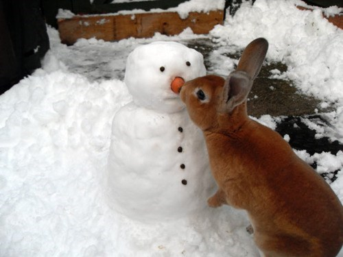 Bunday snow winter rabbit bunny squee snowman - 6906849024