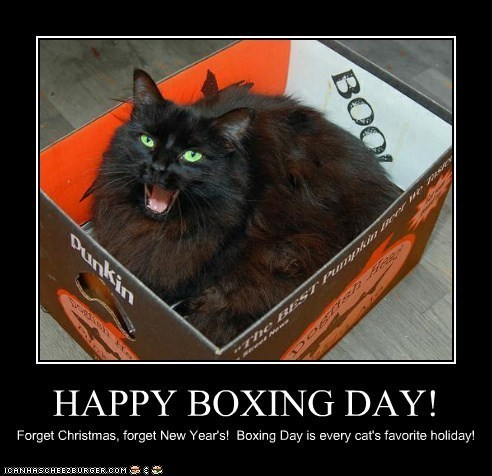 cardboard boxes boxes captions boxing day Cats holidays