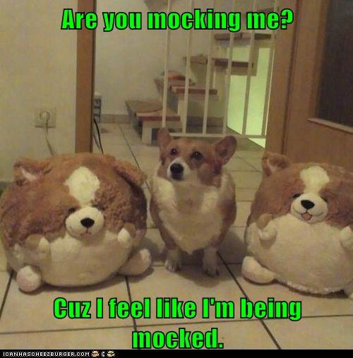 teasing,dogs,stuffed animals,mocking,jokes,corgi