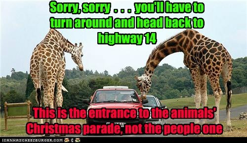 christmas,strict,entrance,parade,sorry,turn around,giraffes