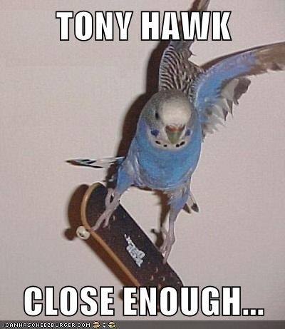 parakeets,birds,tony hawk,Close Enough,skateboard