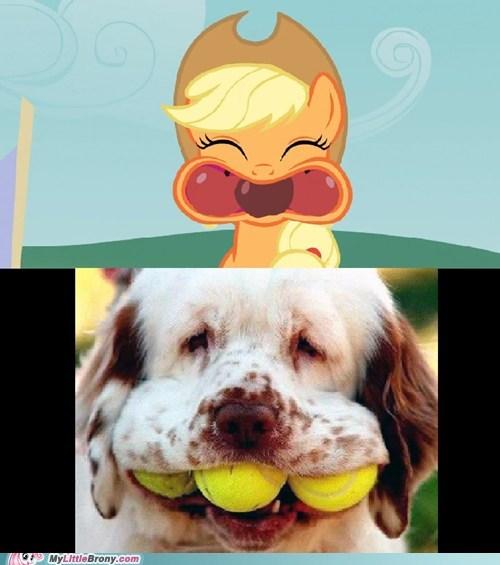 balls dogs bobbing for apples - 6909198336