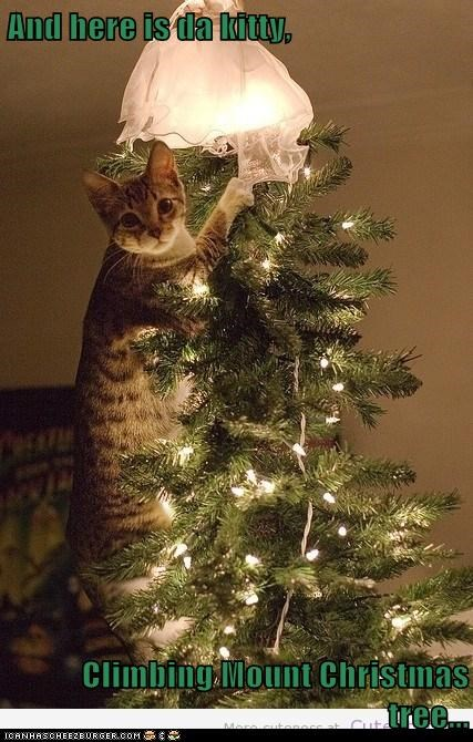 And here is da kitty,  Climbing Mount Christmas tree...