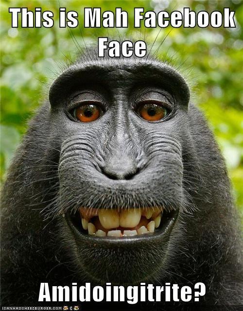 face monkeys facebook - 6909922816
