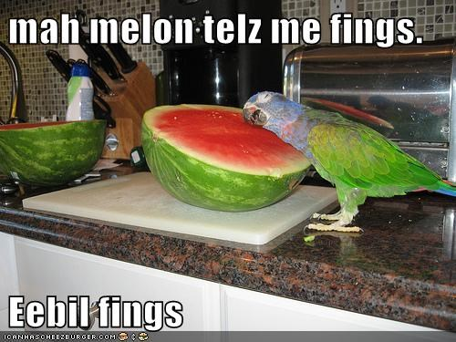 crazy,voices,parrots,evil,listening,watermelon