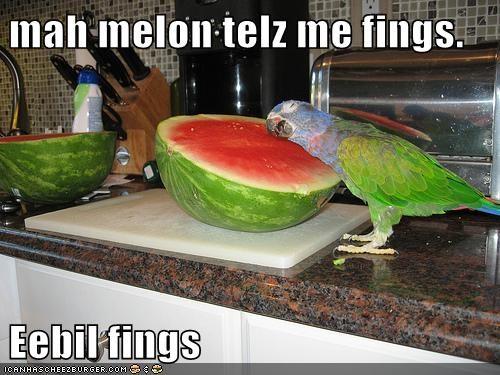 crazy voices parrots evil listening watermelon - 6909997824