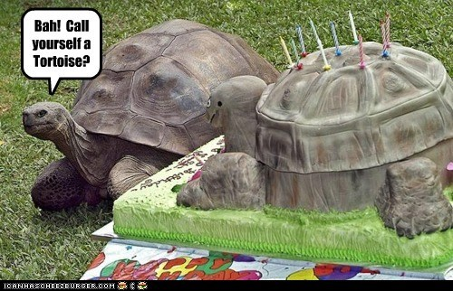 Bah! Call yourself a Tortoise?