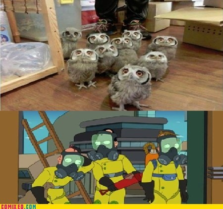 owls,futurama