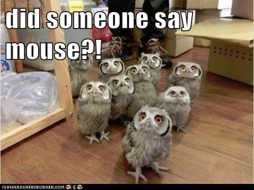 excited,attention,owls,crowd,mouse