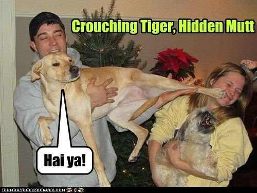 crouching tiger dogs kicking martial arts karate what breed - 6910572288