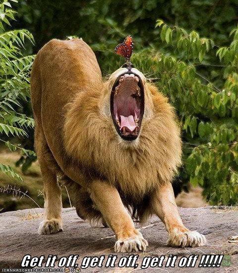lions screaming butterflies roaring get it off scared - 6910704128