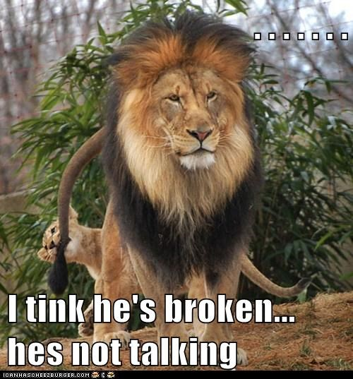 annoyed,lions,tail pulling,cubs,not talking,broken