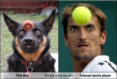 TLL dogs intense tennis player