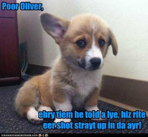 Poor Oliver, ebry tiem he told a lye, hiz rite eer shot strayt up in da ayr!