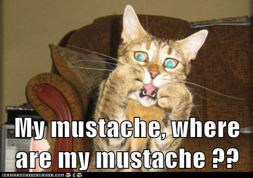 My mustache, where are my mustache ??