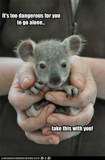 baby animals,legend of zelda,koalas,take this,dangerous