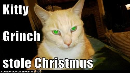 Kitty Grinch stole Christmus
