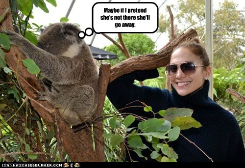 jennifer lopez,go away,ignoring,koalas,pretend