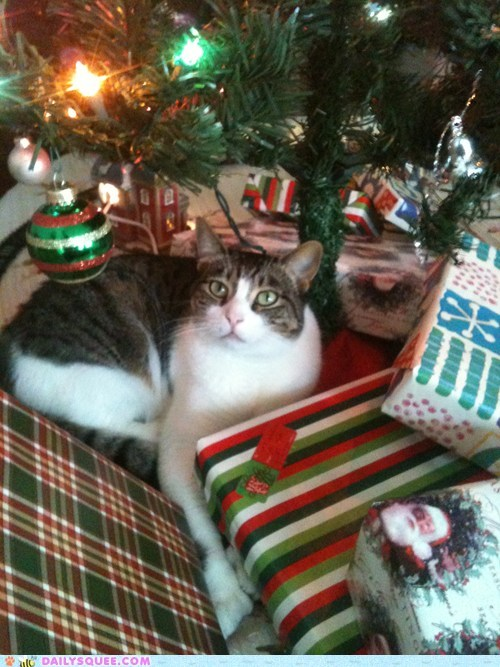 presents,reader squee,pets,christmas tree,Cats,squee,holidays