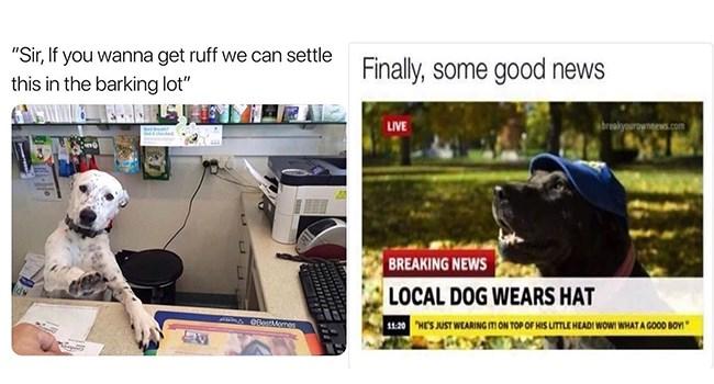 Adorable dog meme - Dog Memes