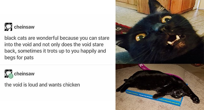 user submitted cute Cats void black cat - 6913541