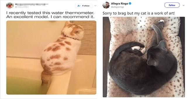 tweets cat tweets funny tweets Cats - 6914053
