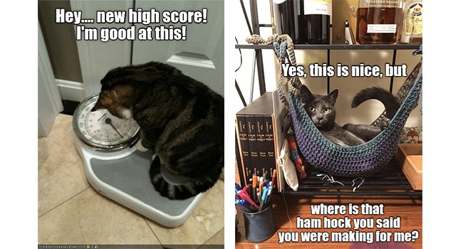 lolcats user submitted funny memes Memes Cats - 6914309