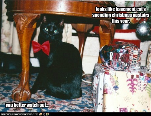 looks like basement cat's spending christmas upstairs this year. you better watch out...