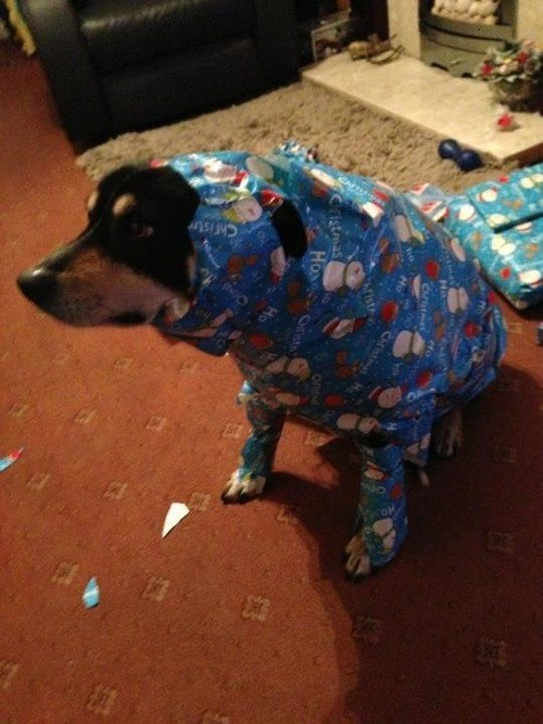 christmas presents dogs funny holidays - 6914978304