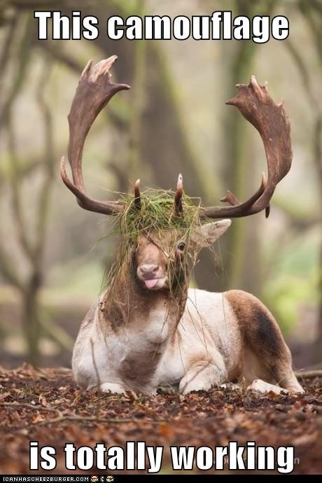 camouflage working grass deer derp stupid