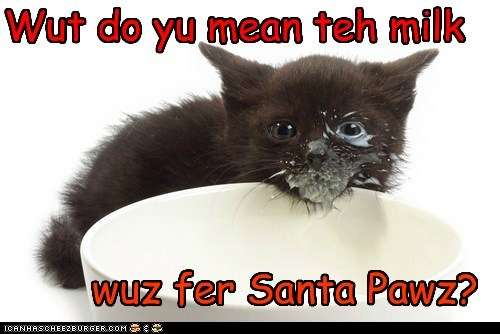 Wut do yu mean teh milk wuz fer Santa Pawz?