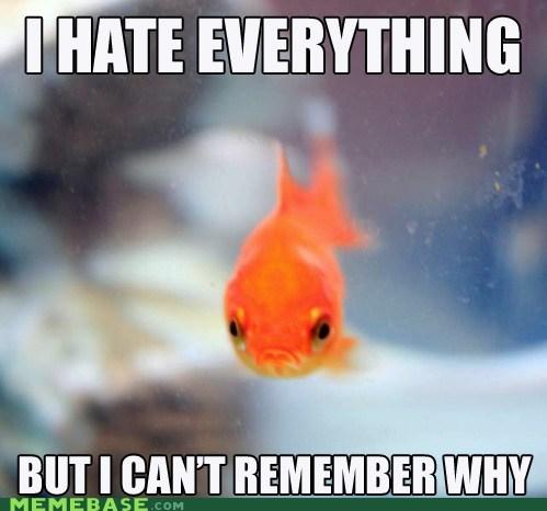memory goldfish grumpy fish grumpy fish i hate everything - 6915953664