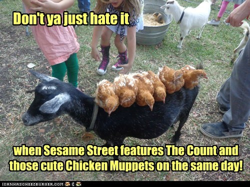 Don't ya just hate it when Sesame Street features The Count and those cute Chicken Muppets on the same day!