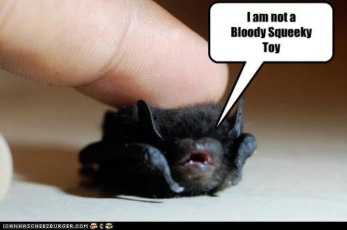 baby animals,bats,finger,not,squeaky toy,angry,threat