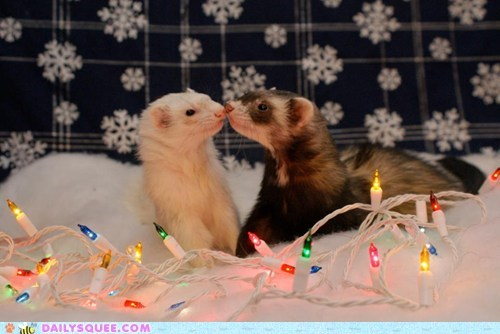 reader squee,ferrets,christmas lights,squee,holidays,delightful insurance