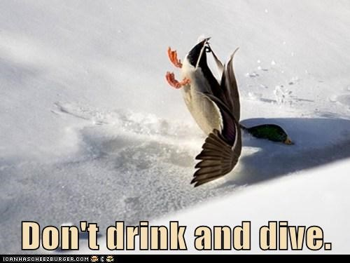 diving,drinking,crashing,psa,puns,ducks