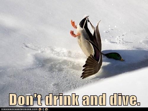 diving drinking crashing psa puns ducks - 6916764416