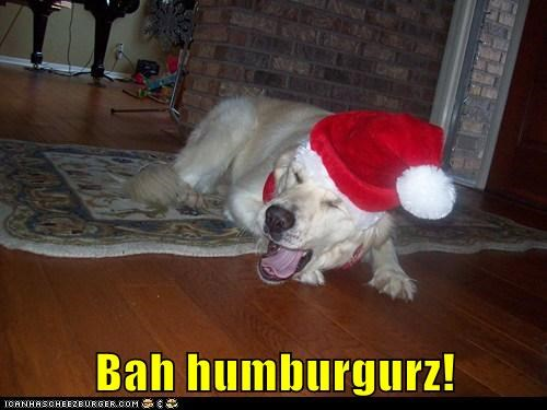 scrooge dogs labrador bah humbug santa hat holidays - 6916888064