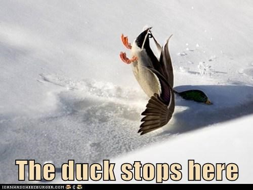 crashing,snow,idiom,puns,ducks,stopping