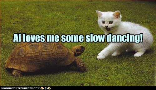 slow dancing turtles slow love partner Cats smile